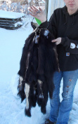 1 - Tanned Skunk Pelt with unusual white patch