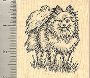 Pomeranian Rubber Stamp, Toy Dog, Pom