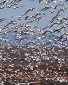Seagulls Aloft Blank Book Lined Journal