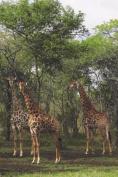 Giraffe Tower Blank Book Lined Journal