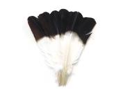 "Moonlight Feather, Imitation Eagle Feathers - White Tom Turkey Rounds ""Eagle"" Brown Tipped Feathers - 0.1kg"