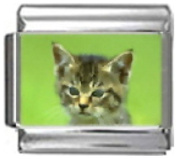 KITTEN BROWN WHITE Photo Italian Charm 9mm Link - 1 x CA101 Single Bracelet Link