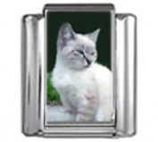 CAT GREY WHITE Photo Italian Charm 9mm Link - 1 x CA086 Single Bracelet Link