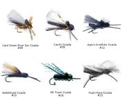 Best of MFC Cicada flies
