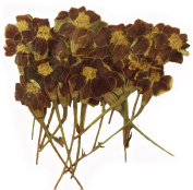 Pressed flowers marigold 20pcs for art craft, card making, scrapbooking material