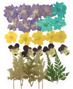 Pressed flowers, larkspur, evening primrose, pansy, foliage for art & craft, card making