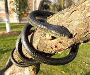 Snake Toy, Northbear Realistic Rubber Black Mamba Snake Toy 130cm Long Party Prank
