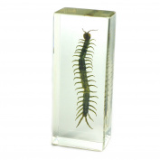 Centipede Paperweight