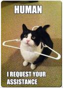 Cat human i request your assistance funny fridge magnet 8.9cm x 2 /46cm name card size rectangular magnets.