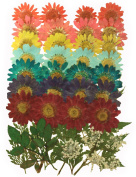 Pressed flowers mixed pack, marguerite 7 colours, lace flowers, rose leaves, foliage