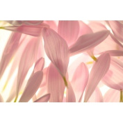 Delicate Petals Lilac - 3309 - Premium Fragrance Oil - 2 Oz (60 ml) - BUY 2 and GET  .   - Free EXPEDITED Shipping