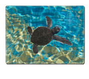 Luxlady Natural Rubber Placemat IMAGE ID 26144432 Baby turtle swimming in water