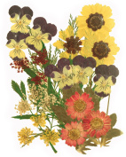 Pressed flowers mixed pack, pansy, marguerite, lace flowers, foliage for art craft, card making