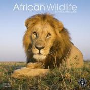 African Wildlife: 2018