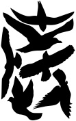 Bird Window Silhouettes stickers decals