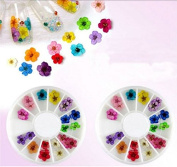Wheel of Dried Flowers - Dried Flowers Mix Cute Nails