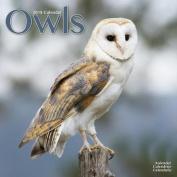Owls Calendar 2018