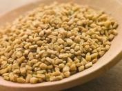500 graines de FENUGREC (Trigonella Foenum-Graecum) H471 FENUGREEK SEEDS SAMEN
