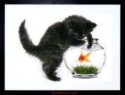 PHOTO BLACK KITTEN CAT PLAYING GOLDFISH BOWL HOME FRAMED PRINT F97X2820