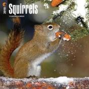 2018 Squirrels Wall Calendar