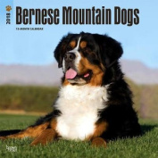 2018 Bernese Mountain Dogs Wall Calendar