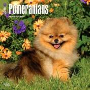 2018 Pomeranians Wall Calendar