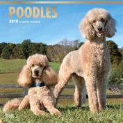 2018 Poodles Wall Calendar