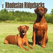 2018 Rhodesian Ridgebacks Wall Calendar