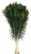 Zucker Feather Products Peacock Tail Eyes, 60cm - 90cm , Natural
