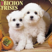 Just Bichons Frises 2018 Wall Calendar