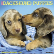 Just Dachshund Puppies 2018 Wall Calendar