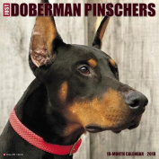 Just Dobermans 2018 Wall Calendar