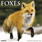 Foxes 2018 Wall Calendar