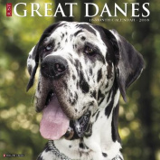Just Great Danes 2018 Wall Calendar