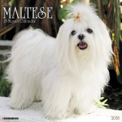 Just Maltese 2018 Wall Calendar