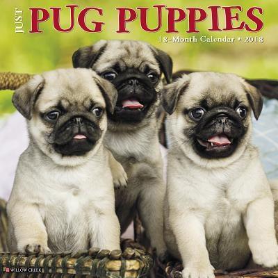 Just Pug Puppies 2018 Wall Calendar Dog Breed Willow Creek Press