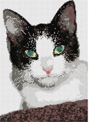 Cat Eyes Needlepoint Kit