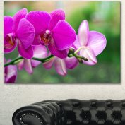 Designart PT14925-32-16 Beautiful Orchid Flowers on Green Canvas Wall Artwork, 80cm x 41cm