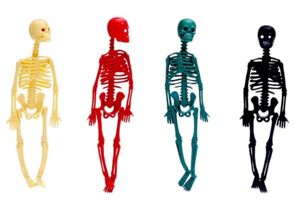 Human Skeleton Model Toys Buy Online From Fishpond