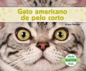 Gato Americano de Pelo Corto (American Shorthair Cats) (Gatos