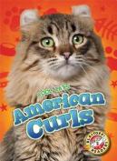 American Curls (Cool Cats)