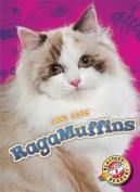 Ragamuffins (Cool Cats)