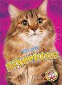 Siberians (Cool Cats)
