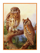 Scops Owls by Archibald Thorburn Bird Counted Cross Stitch Pattern