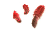 5 Pcs 3D Nail Art Chicken Feathers Red Nail Design Set Nail Art Manicure Pedicure Insert Accessories