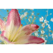 Lilly Flower - 1934 - Candle & Soap Fragrance Oil - 470ml (0.5kg) - High Performance Supply - Special Promotion
