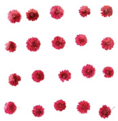 Pressed flowers, pink apricot blossom 20pcs for floral art, craft, card making,