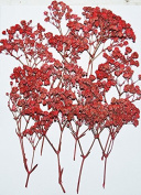 HANDI-KAFU Red Baby's Breath with branch real pressed dried flowers