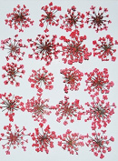 HANDI-KAFU Red Queen Anne's Lace real pressed dried flowers