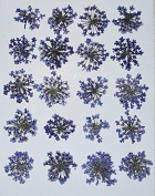 HANDI-KAFU Purple Queen Anne's Lace real pressed dried flowers